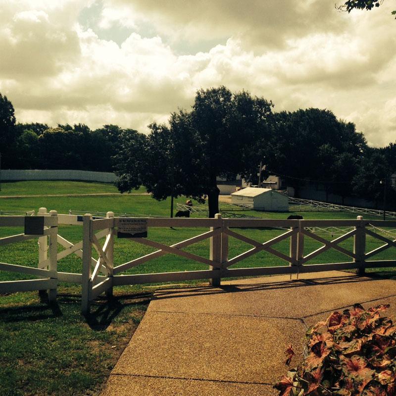 Pasture in Graceland